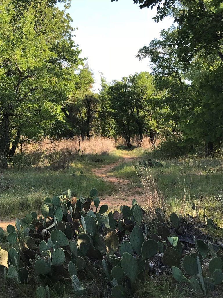 Nopales Ridge Trail