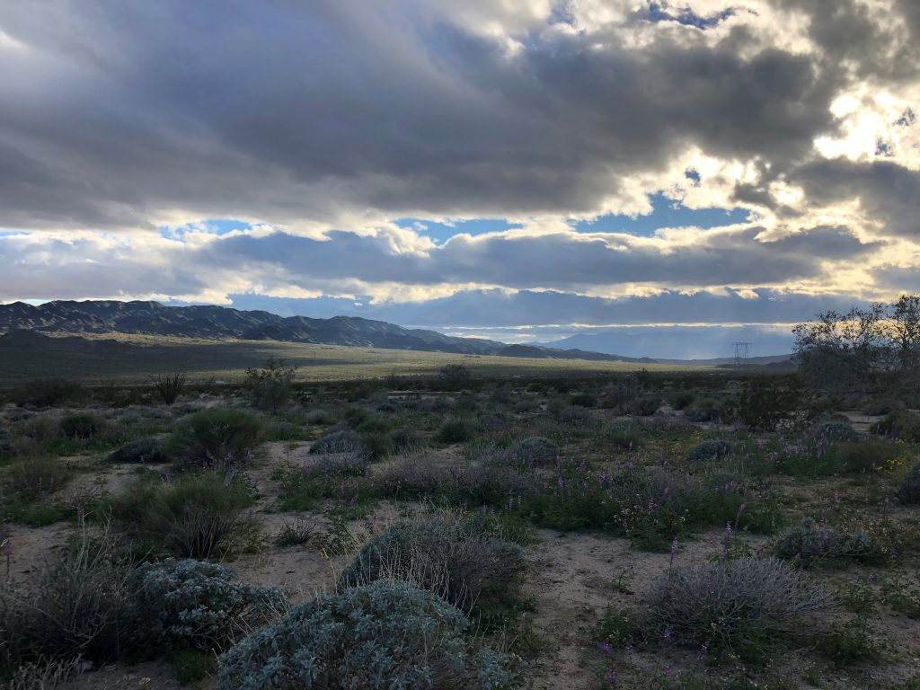 View from our living room window while boondocking at Joshua Tree National Park with the kids