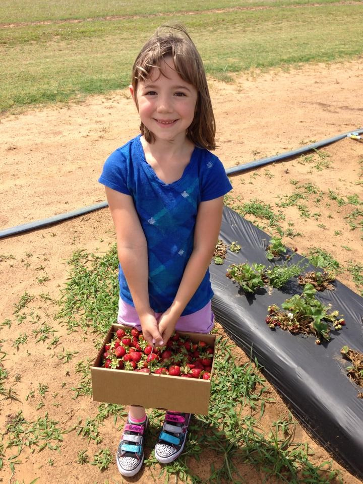 Dallas homeschooling Abi Strawberry Picking