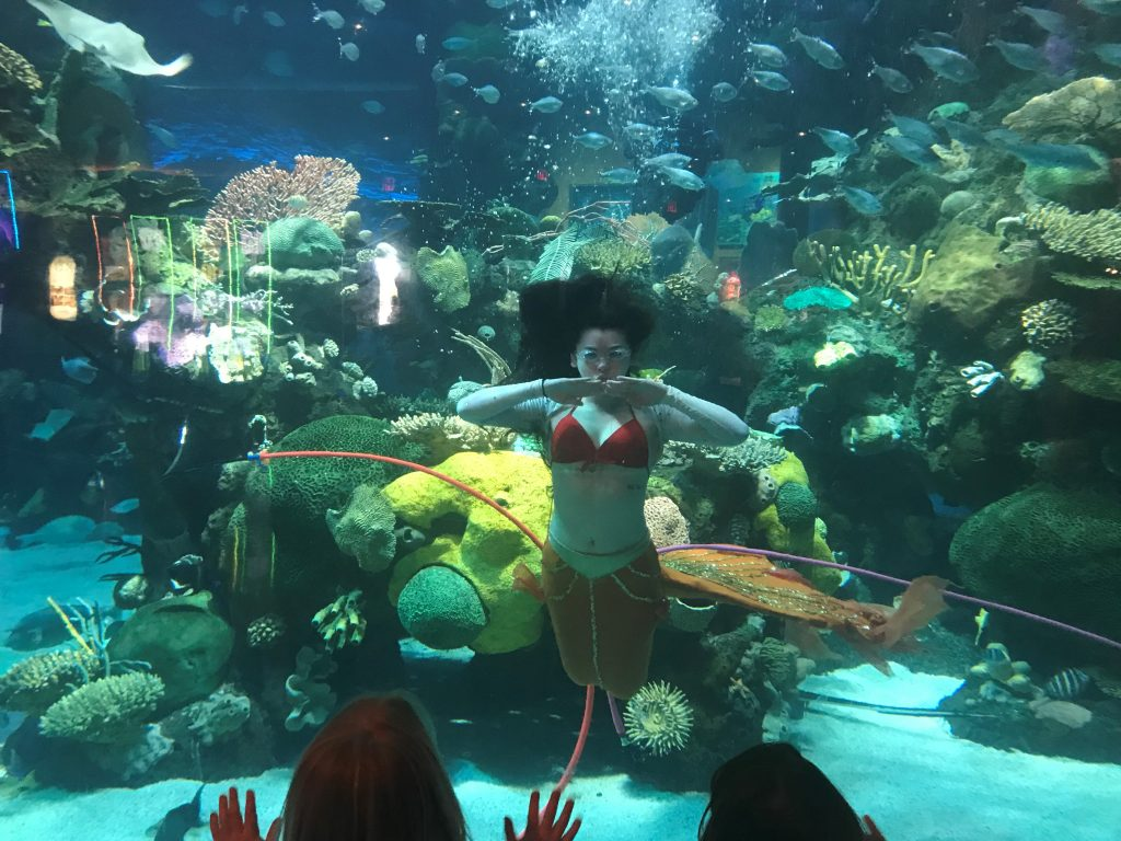 Real mermaids at the Silverton Hotel and Casino